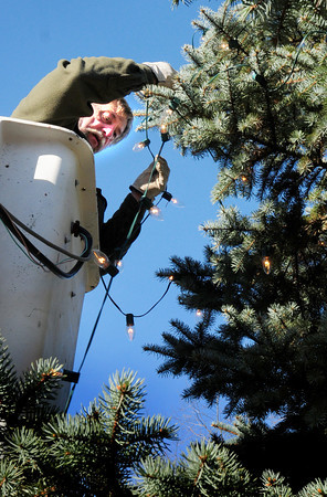 Salisbury: Ray Cote of the Salisbury DPW strings lights on the tree in Salisbury Square on Tuesday afternoon. The lighting of the tree will be this Sunday at 6:00p.m. Bryan Eaton/Staff Photo