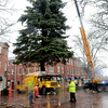 Newburyport: This year's Christmas tree was put into place in Newburyport's Market Square yesterday afternoon coming from West Newbury. Santa Claus will arrive for the tree's lighting on November 25th. Bryan Eaton/Staff Photo