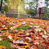 Newburyport: Historical Society of Old Newbury curator Jay Williamson stands among the fallen leaves and headstones, a sure sign of October, at Oak Hill Cemetery on Wednesday morning. He was mapping out a tour for adults at a Halloween Haunting at the end of the month with a focus on the way some people died in the 19th century. Bryan Eaton/Staff Photo