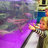 Newbury: James Armstrong, 3, back and Kaitlyn Christie, 2, check out the fish in the science area at the Secret Garden Preschool. Bryan Eaton/Staff Photo
