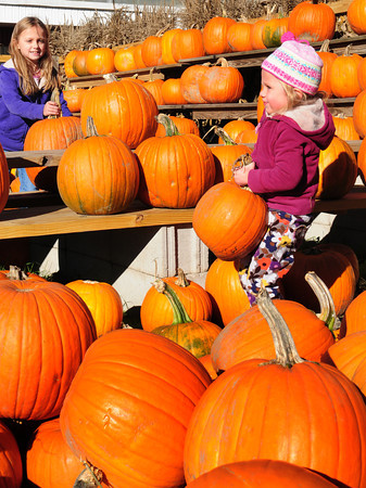 Amesbury: Sisters Clara Quinlan, 7, left and and Agatha choose pumpkins at Cider Hill Farm in Amesbury on Tuesday afternoon. The Amesbury girls were there with their mother, Kimberly, and brother Charles, 6, to get the pumpkins for carving. Bryan Eaton/Staff Photo
