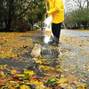 Newburyport: Pete Carlson clears a drain from fallen leaves in front of his home on Merrimac Street in Newburyport. Bryan Eaton/Staff Photo