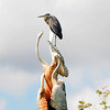 Newburyport: A great blue heron perches on top of the Swan Fountain on teh Mall in Newburyport Monday. Jim Vaiknoras/staff photo