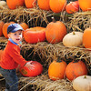Newbury: The frost isn't quite on the pumpkin, but local farms have harvested their crop. Theo Refour, 18, months, shows his mother, Stephenie of Newburyport, and brother, Ronan, 3, one he picked out at Tendercrop Farm in Newbury on Tuesday afternoon. Bryan Eaton/Staff Photo