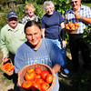 Salisbury: Volunteers have been growing vegetables for the Pettingill House Food Pantry on land owned by Carlene (Pettingill) Johnson whose family ran a farm on the Beach Road in Salisbury property for generations. Clockwise, from front, Michelle Walsh, Al Fisher, Carlene Johnson, Jane Perkins and Charles LaBella. Bryan Eaton/Staff Photo
