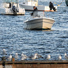 Salisbury: A flock of seagulls sit on a dock near the Salisbury town pier as a man behind the fishes in the Merrimack River. Jim Vaiknoras/staff photo