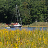 Amesbury: A sailboat along the Merrimack River as seen through a field of golden rod on Deer Island in Amesbury. Jim Vaiknoras/staff photo