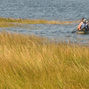 Newbury: A tandem kayak makes it's way the seagrass on Joppa Flats Sunday morning. Jim Vaiknoras/staff photo