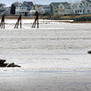 Salisbury: Harbor seals jump onto rocks in the Merrimack River off Salisbury Beach State Reservation on Tuesday as their resting places became exposed by the outgoing tide. Bryan Eaton/Staff Photo