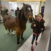 Groveland:Branch Manager Justin Otto along with Mary Martin takes a photo of  Isobell Bouny with Boo at the TD Bank in Groveland Friday. Boo was there to accept a donation to New England Equine Rescue North. Jim Vaiknoras/staff photo