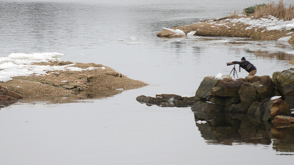 Amesbury: A lone photographer takes photos of water foul off Deer Island in Amesbury Sunday morning. Jim Vaiknoras/staff photo