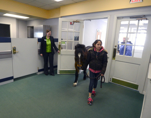 Groveland:Alicia Barton holds the door as Isobell Bouny leads in Boo to the TD Bank in Groveland Friday. Boo was there to accept a donation to New England Equine Rescue North. Jim Vaiknoras/staff photo