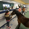 Groveland: Isobell Bounsy and Boo wait in line at the TD Bank in Groveland Friday. Boo was there to accept a donation to New England Equine Rescue North.he was waiting in line for a lolipop. Jim Vaiknoras/staff photo