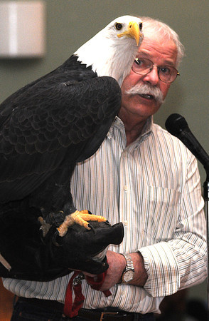 Newburyport:Tom Ricardi holds a bald eagle during a presentation at Newburyport City Hall Saturday as part of the 4th annual Newburyport Eagle Festival photo by Jim Vaiknoras/Newburyport Daily News. February 14, 2009<br /> , Newburyport:Tom Ricardi holds a bald eagle during a presentation at Newburyport City Hall Saturday as part of the 4th annual Newburyport Eagle Festival photo by Jim Vaiknoras/Newburyport Daily News. February 14, 2009