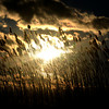 Salisbury: The setting sun shines behind seagrass at Salisbury Beach. JIm Vaiknoras/staff photo