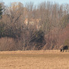 Amesbury: A woman walks her dog on a windy afternoon at Woodsom Farm in Amesbury. Jim Vaiknoras/staff photo
