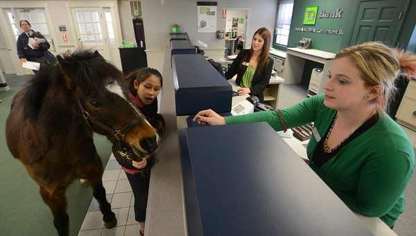Groveland: Isobell Bouny looks on as Boo eat a lolipop given to him by teller Alicia Barton at the TD Bank in Groveland Friday. Boo was there to accept a donation to New England Equine Rescue North. Jim Vaiknoras/staff photo