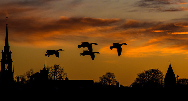 Newburyport: A quartet of geese flying along the Merrimack River are siluetted against a painted sky late Saturday afternoon. Jim Vaiknoras/staff photo