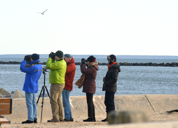 Salisbury: Birders check out the wildlife at Salisbury Beach Saturday. Jim Vaiknoras/staff photo
