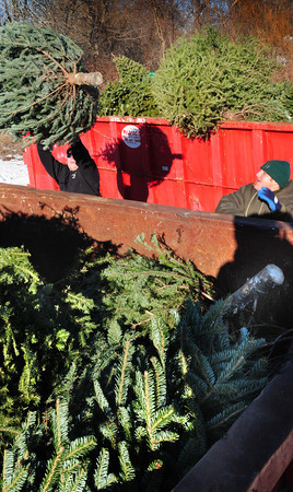 Newburyport: Robert Serino, president of the Protection Fire Company 2 , left, and Capt. Nate Walker load Christmas trees into dumpsters at the Newbury fire headquarters to be used in the Old Newbury Bonfire a week from Saturday. They are short of trees and are looking for more donations. Bryan Eaton/Staff Photo