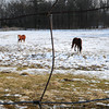 Amesbury: These two horses nibble on patches of grass sticking out from the snow. They should have an easier time of it as the snow will be melting the next couple days as temperatures rise. Bryan Eaton/Staff Photo