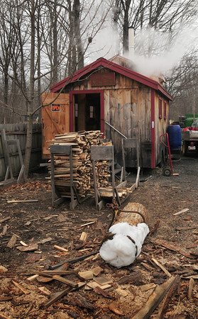 Byfield: Bernard Field has already gone through ten cords of wood at his maple syrup shed in Byfield. Bryan Eaton/Staff Photo