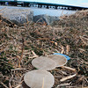 Newburyport: The discs that were accidentally releases from a wastewater plant in Hooksett, NH are still appearing in the area, here at Cashman Park in Newburyport on Friday. Bryan Eaton/Staff Photo