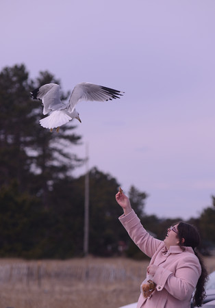 salisbury: Clare McGadrigan of North Andover feed seagull at Salisbury Beach Reservation. She offered a nice mix of cereal, cracker, and Cheez-its. Jim Vaiknoras/staff photo