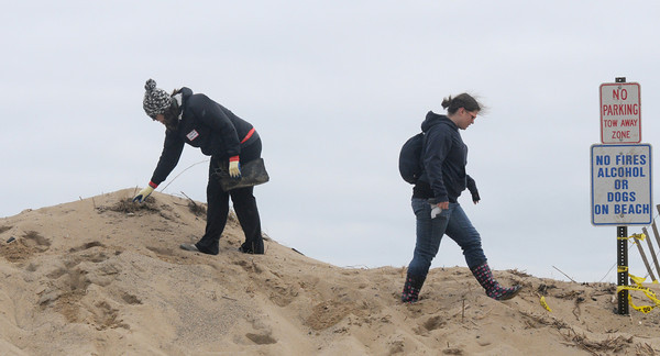 Newbury:Brooke Wheeler and Ashley Ashmead pick up debris on Plum Island. The two are from New Ipswich NH and came to the island as kids when their great grandparents had a place, so they came down to help out. A group of about 40 people pitch in to clean up the beach Monday morning. Jim Vaiknoras/staff photo