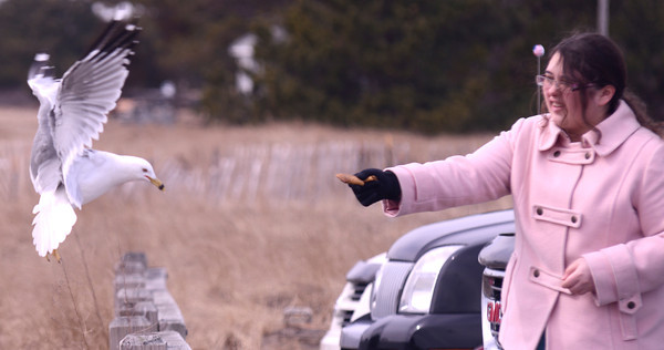 salisbury: Clare McGadrigan of North Andover feed seagull at Salisbury Beach Reservation. She offered a nice mix of cereal, crackers, and Cheez-its. Jim Vaiknoras/staff photo