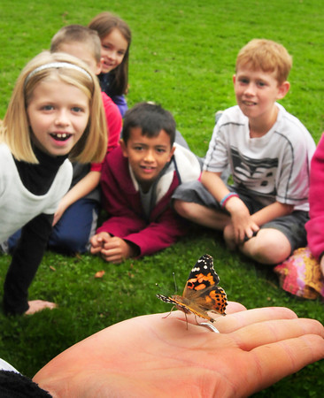 Amesbury: Cashman School teacher Amy Mitchell releases one of several American Painted Lady butterflies on Tuesday to the amazement of students. Third-graders have been learning about life cycles in the animal kingdom and have watched the butterfly eggs hatch and tadpoles turn into frogs. Bryan Eaton/Staff Photo