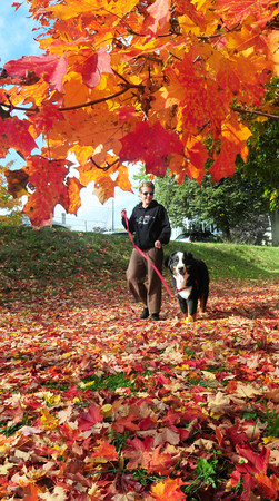 Newburyport: Lynn Whitcomb of Newburyport, and Rocky, walk above and below foliage at the Bartlet Mall on Monday afternoon. Though the leaves are changing color, many trees are still green. Jonathan Sherwood is running for Amesbury District 6 city councilor. Bryan Eaton/Staff Photo