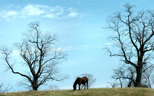 Salisbury: A horse on Congress Street in Salisbury grazes in a field which is becoming greener as the weather gets warmer. Bryan Eaton/Staff Photo