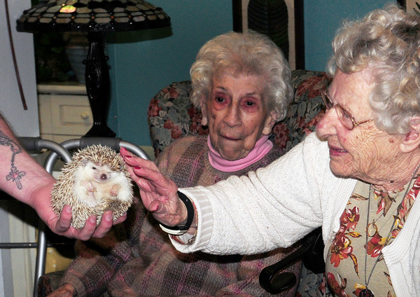 Salisbury: Phyllis Arsenault touches a hedgehog from Africa held by Shawn Queenan on Monday. Queenan, from Curious Creatures, was at the Salisbury Assisted Living Center as they celebrated Earth Day. Bryan Eaton/Staff Photo