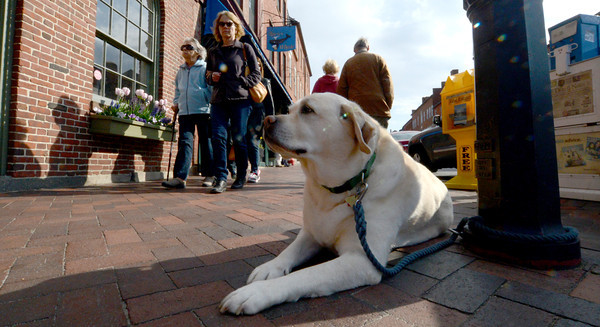 newburyport: Che, 8, of Newburyport waits patiently outside of Starbucks on State Street in Newburyport for Jeanne Wallace to return with her coffee. Jim Vaiknoras/staff photo