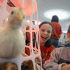 Amesbury: Emily Graham and her brother Ryan get a laugh as one of their chickens pecks the photographer camera lens at Amesbury PTA Science Fair at Amesbury high school Saturday. Emily's project , along with her sister Annabel was to measure the growth rates of different types of chickens. Elementary School kids presented 55 projects at the fair. Jim Vaiknoras/staff photo