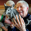 BRYAN EATON/ Staff Photo. Alice Jo Taylor checks out Wally, a chinchilla, held by Lenny Smart of Curious Creatures as he brings it around to residents of Atria Merrimack Place in Newburyport. She said that being blind she appreciates that she could touch the various animals during the presentation.