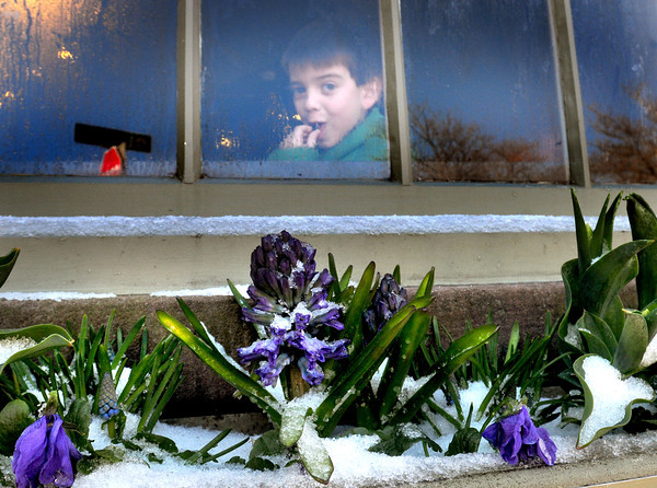 BRYAN EATON/ Staff Photo. Graham Tunnicliffe, 6, of Georgetown looks through the window of Starbucks in downtown Newburyport over a snow-covered flower box Wednesday morning. Below average temperatures will continue into the start of the weekend.