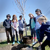 BRYAN EATON/Staff Photo. Students from the River Valley Charter School in Newburyport planted four red maple trees on the median on Perry Way in front of the school as an act of beautifying the city. They were aided by the Newburyport Department of Public Services and the Newburyport Tree Commission.