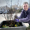 BRYAN EATON/Staff Photo. Jean Berger volunteers her time to maintain plantings on YWCA of Newburyport properties.