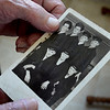 BRYAN EATON/Staff Photo. Bill Ryan shows a photo taken at boot camp in the Great Lakes in early 1943 with fellow sailors who all made it back from the war. Front, from left, Ryan, Alan Rush and Walter Renaud. Back, from, left, Bud Laverriere, Chick Paradis, Bill Greaney and Walter Perkins, though not all name spellings may be exact.