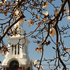 JIM VAIKNORAS/Staff photo The Central Congregational Church in Newburyport is framed by magnolia blossoms in front of City Hall.