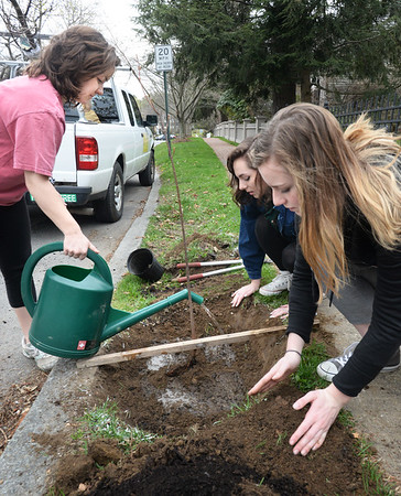 BRYAN EATON/Staff Photo. Members of the Newburyport High School Environmental Club planted a tree for Earth Day on Toppan's Lane across from the high school. Watering the red maple, from left, Molly Beluk, Annaliese Keller and Sarah Simon.