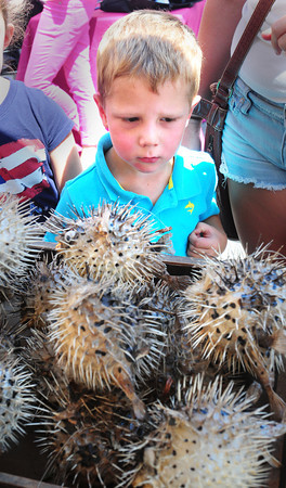 Newburyport: Liam Roberts, 4, of Ipswich doesn't seem to know what to make of these puffin fish during Olde Fashion Sidewalk Sales. He was at the Sunburst Trading Co. booth out of Rowley and Key West. Bryan Eaton/Staff Photo