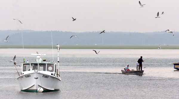 Seabrook: These seagulls are hoping to get lucky as well as these fisherman casting their lines in Seabrook Harbor on Tuesday. Bryan Eaton/Staff Photo