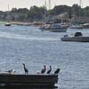 Salisbury: Cormorants sit on a dock near the Salisbury Town Pier as boats move along the Merrimack River Sunday morning. Jim Vaiknoras/staff photo