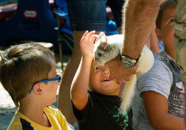 BRYAN EATON/Staff photo. Youngsters pet a chinchilla passed around by staff from Curious Creatures at the Newburyport YWCA's Children's Center on Tuesday. It was the last presentation of their Summer Fun Series.
