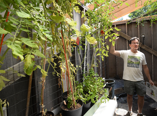 BRYAN EATON/Staff photo. Amesbury resident Ed Tivnan explains his aquaponic system which recycles water for his plants grown in pots reducing greatly the need for constant water supply.
