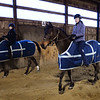 BRYAN EATON/Staff photo. Several area horse farms have been awarded Mass. Farm Bureau Federation's 2017 Horse Farm of Distintion award. Taking lessons late Wednesday afternoon at High Tail Acres in Newbury, from left, Kiara Farrar, 12, of Salisbury; Samantha Lucy, 16, of Newburyport and Abigail Tate, 14, of Newbury.