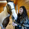 BRYAN EATON/Staff photo. Several area horse farms have been awarded Mass. Farm Bureau Federation's 2017 Horse Farm of Distintion award. Gale Meserve shows off her personal horse, Sun Don Bar, at her Barnyard Maples in Byfield.